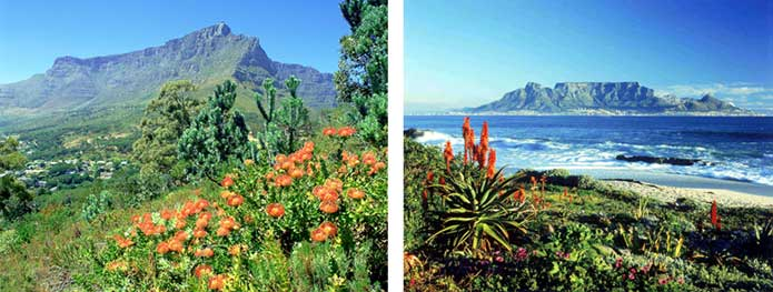 "Images of the Cape floral ""fynbos"""