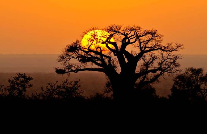 kruger2kalahari southern african wildlife photography