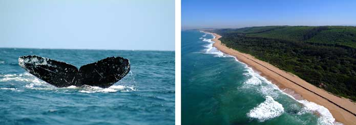 North Coast of Kwazulu-Natal - whales and beaches