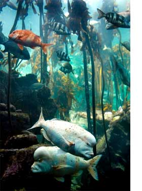Two Oceans Aquarium Cape Town Waterfront An Indoor