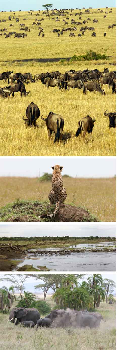 Images of the Serengeti National Park