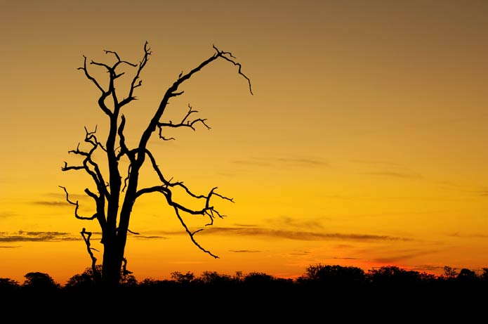 Dead Tree at Sunset - photographed at Kruger National Park